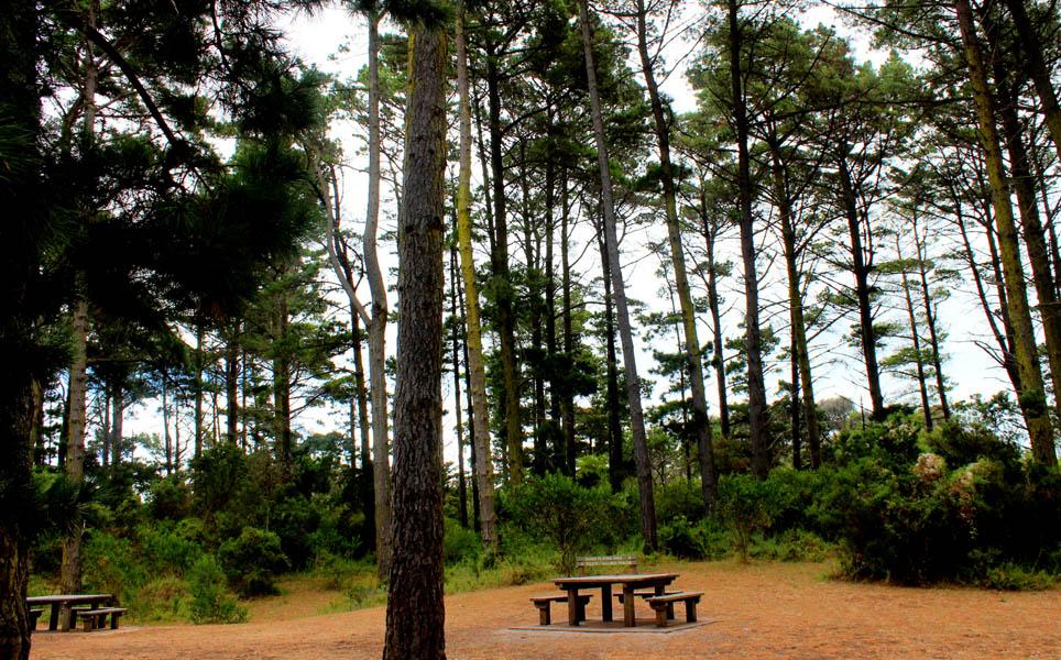 fingal picnic area cape schanck