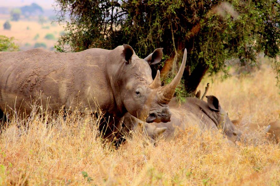 Rhino NNP