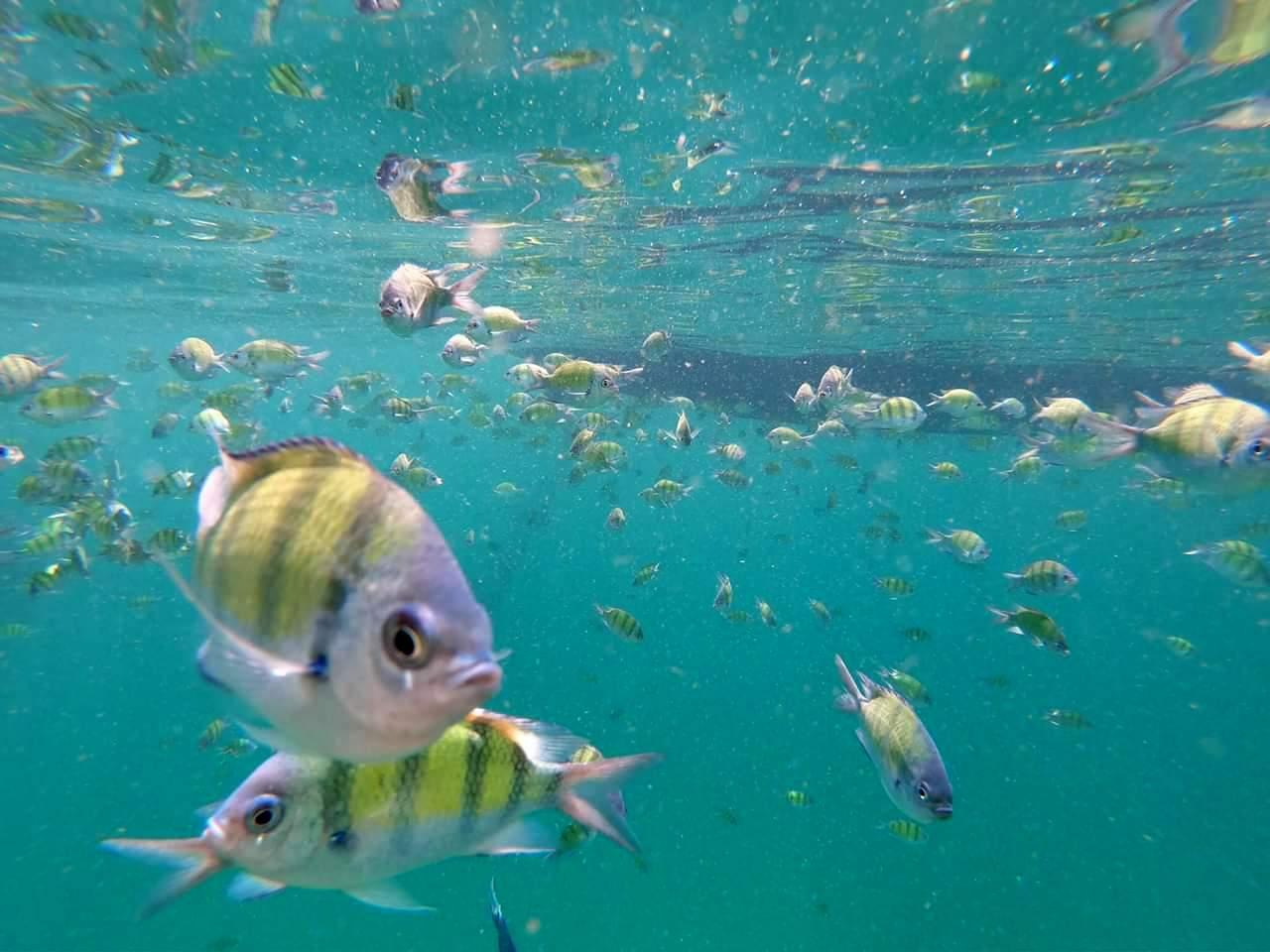 koh phi phi snorkeling backpacking romance