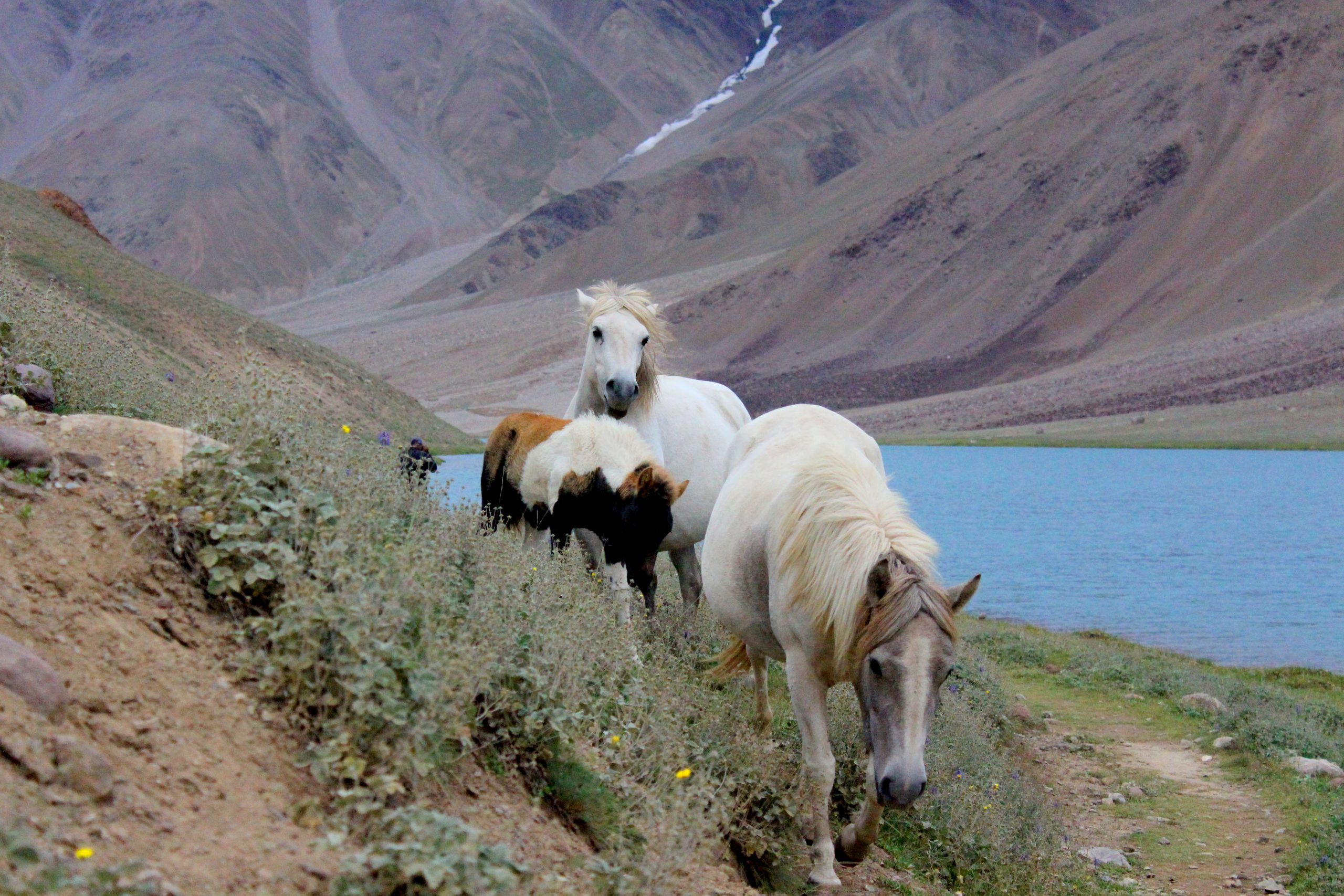 chandra taal spiti valley backpacking romance