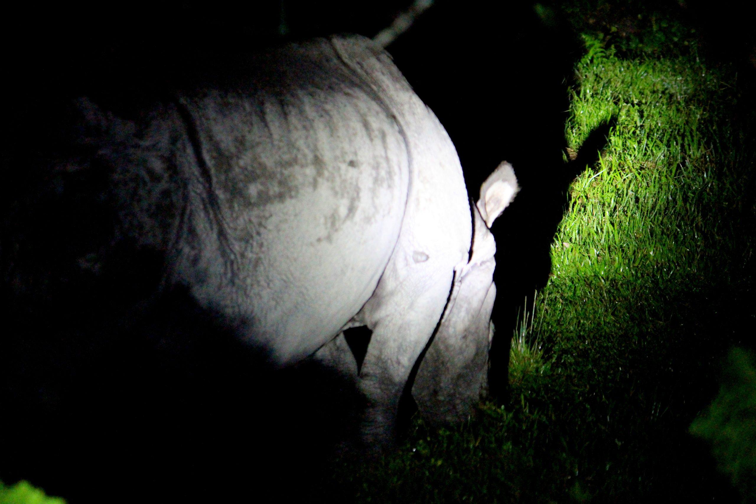 jaldapara wildlife sanctuary rhino