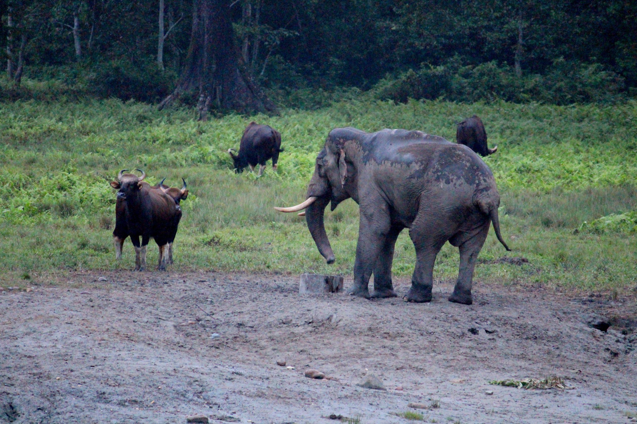 Spotting One-Horned Rhinos in Jaldapara Wildlife Sanctuary elephants