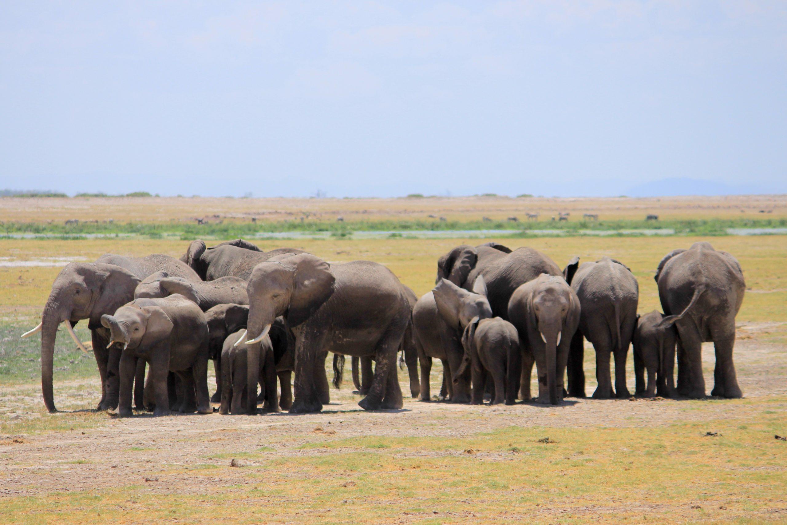48 Hours In Amboseli